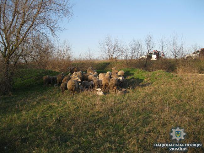 Измаильские правоохранители «по горячим следам» задержали угонщика стада
