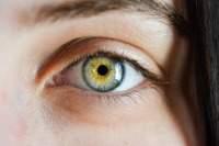 Учёные узнали, как остановить слепоту