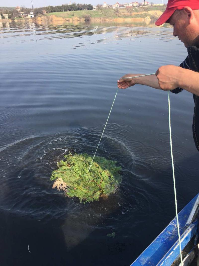 На водоёмах Одесщины установили около 3 тысяч нерестовых гнёзд для судака