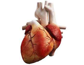 Впервые в мире: медикам удалось оживить замороженное сердце