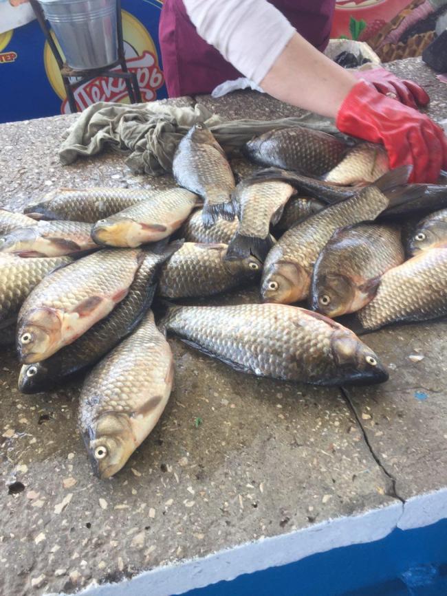В течение недели Одесский рыбоохранный патруль изъял более 500 кг рыбы