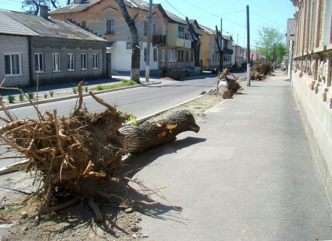 Измаильские общественники пытаются противостоять варварскому уничтожению деревьев в городе
