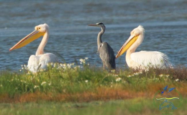 """В """"Тузловских лиманах"""" построят ещё три острова для птиц"""
