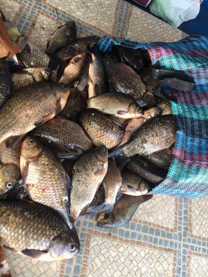 В течение недели Одесский рыбоохранный патруль изъял более 300 кг рыбы