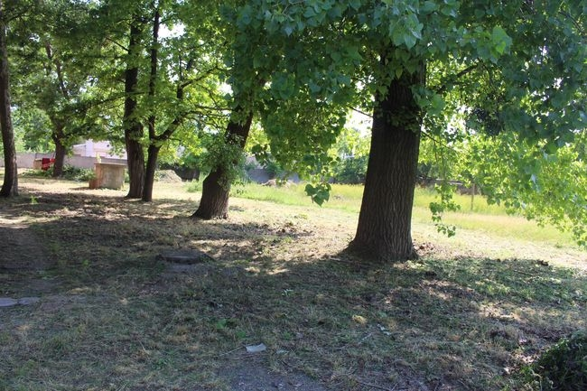 Палаточный городок установят на пустыре за старым зданием педина
