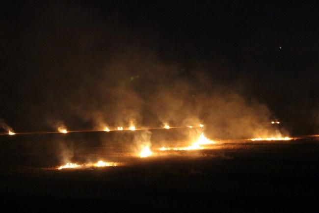 На полях Измаильского района буднично жгут деньги