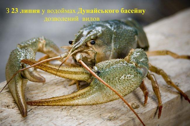 С 23 июля в водоёмах Дунайского бассейна разрешён вылов раков