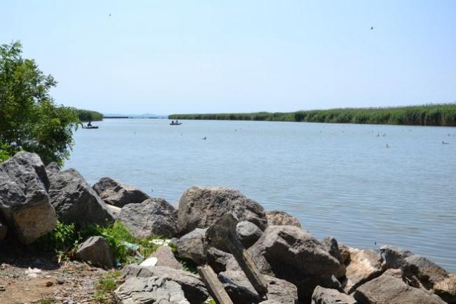 Не местные: придунайские водоёмы медленно, но уверенно пополняют новые виды рыб