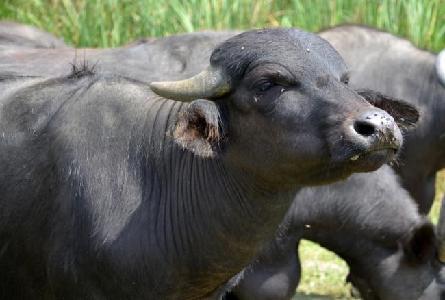 """С мечтой о буйволиной ферме и багги-трассе: экопарк """"Картал"""" отметил первую годовщину"""