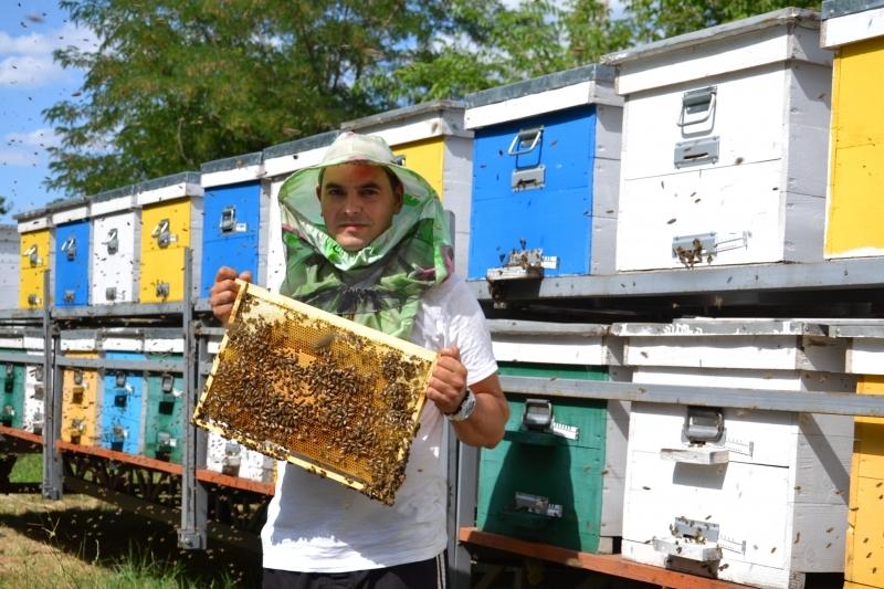 Акациевый, подсолнуховый и софоровый: в Бессарабии завершили сбор медового урожая