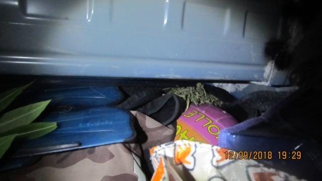 Служебный ягдтерьер помог пограничникам обнаружить наркотики