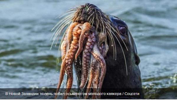 Тюлень осьминогом отхлестал молодого спортсмена: забавное видео