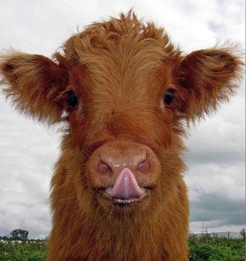 Фермеры Одесской области получат дотацию на 7 млн грн за содержание молодых бычков