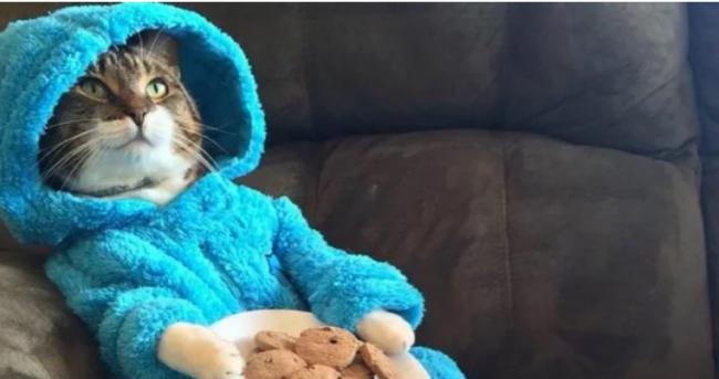 Кот в пижаме и несуществующая встреча: Госдеп разослал странные приглашения