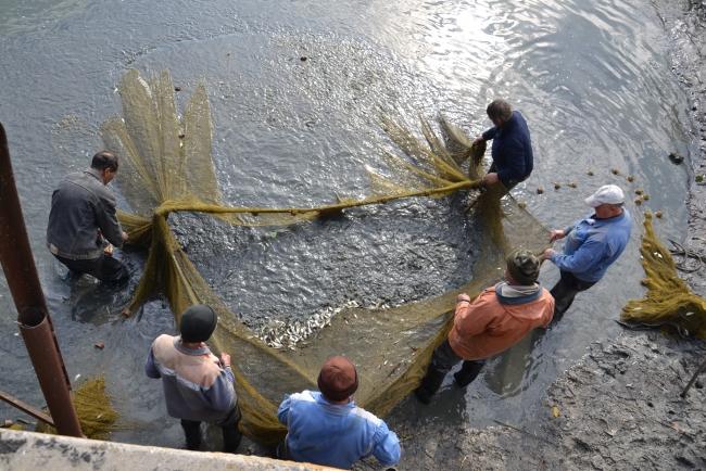 В Ялпуге восполняют рыбные запасы