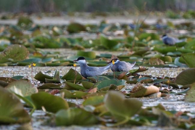 Миллионный европейский грант поможет восстановить экосистему Придунавья