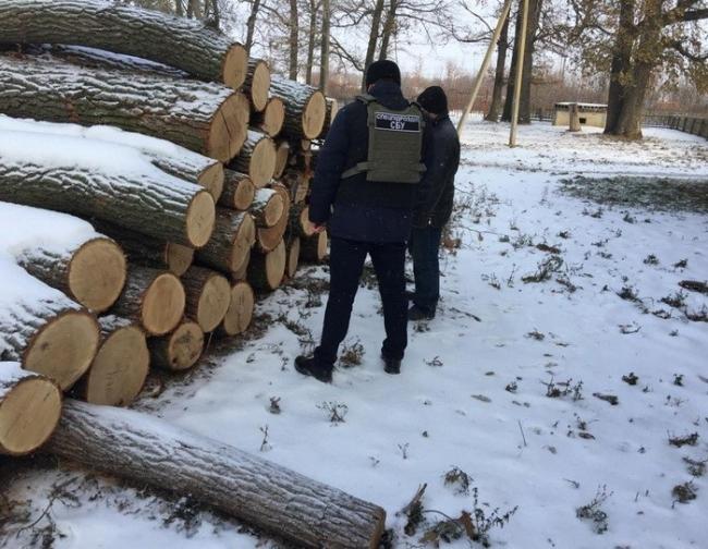 """На Одесщине лесхозы торговали """"неучтённой"""" древесиной """"для своих"""""""