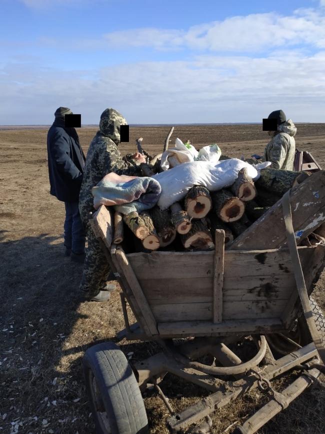 Пограничники в Ренийском районе задержали незаконных лесорубов