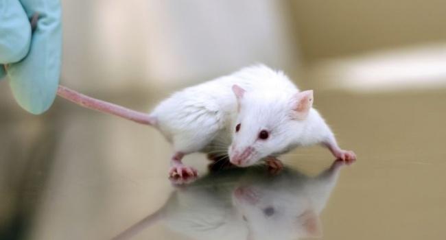 В Украине отменят тестирование косметики на животных