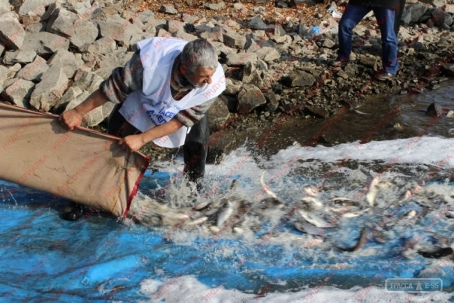 В водоемы Одесской области выпустят еще 7 млн. мальков рыб