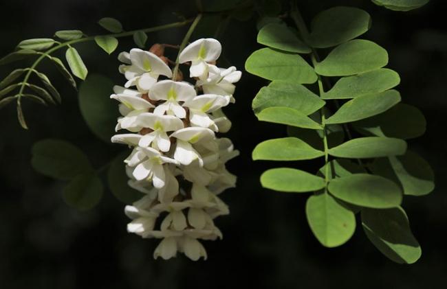 Министерство природы рекомендует засаживать полезащитные полосы деревьями-медоносами