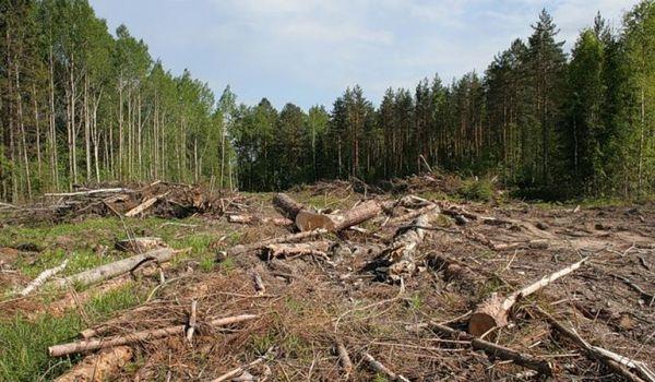 В Украине выросли штрафы за вырубку леса