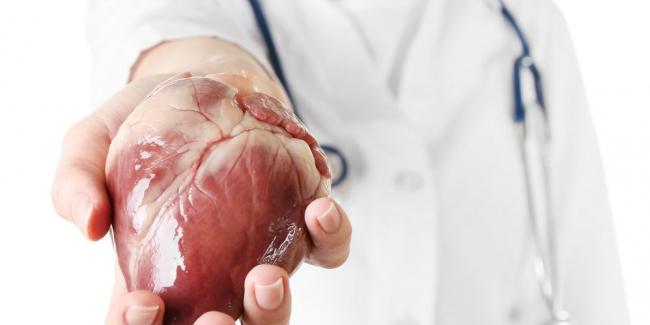 Новый закон о трансплантации органов: что изменится и как он будет действовать