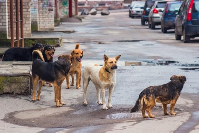 В Рени может появиться городская служба по отлову бродячих животных