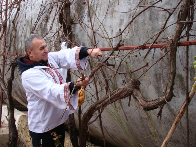 «Трифон Зарезан» в Рени: на местном винзаводе провели первую символическую обрезку виноградной лозы