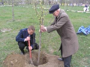 Ветераны Великой Отечественной посадили деревья памяти