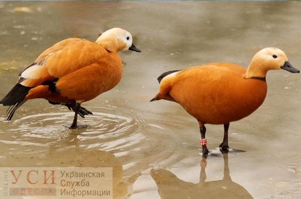 Редкие птицы, прилетевшие в Одесскую область, могут погибнуть из-за уничтожения заповедника