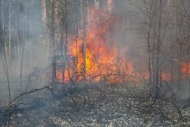 На територии Вилковского лесничества пожар