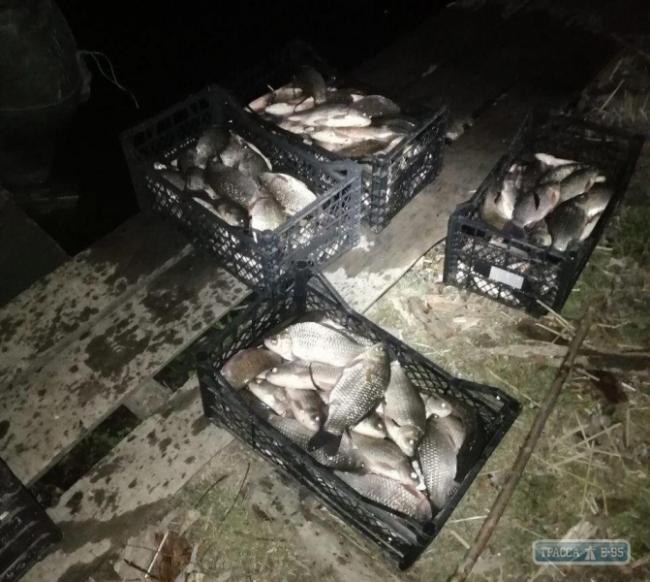 Браконьеры в Одесской области незаконно выловили рыбы почти на 55 тыс. грн