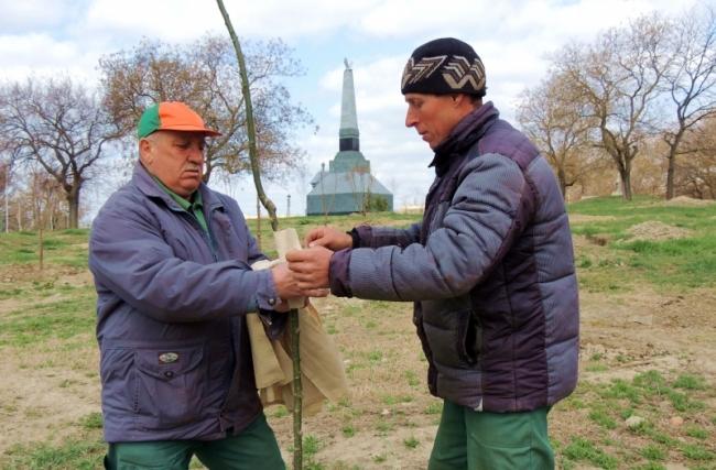 Озеленяют территорию бывшего воинского кладбища