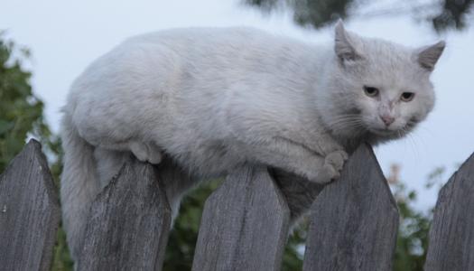 На Львовщине бешеный кот покусал четырех человек