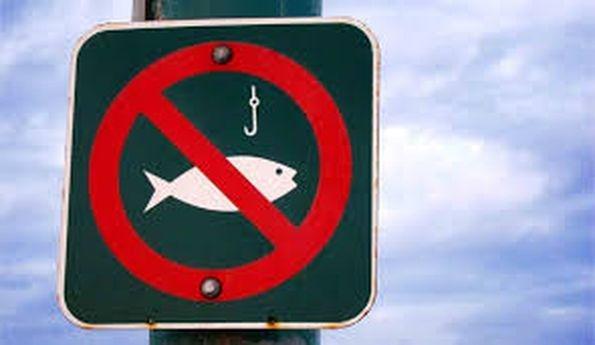 Про встановлення заборони вилову водних біоресурсів у зв'язку з їх нерестом