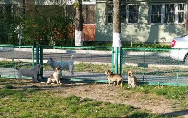 Собака бывает кусачей только от жизни собачьей или Кто виноват и что делать?