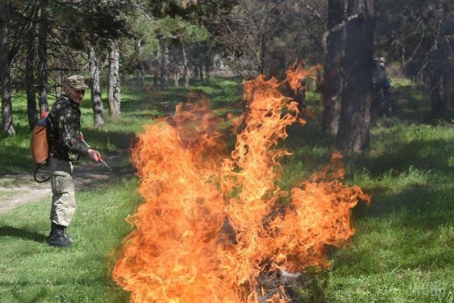 Возле украинской Венеции произошел масштабный лесной пожар