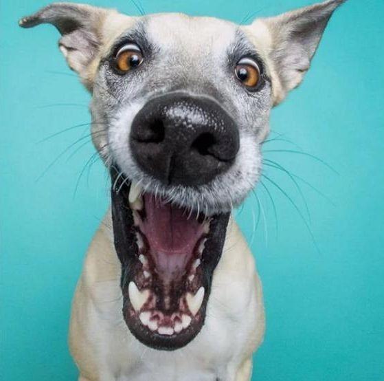 Позируют не хуже людей: собаки-улыбаки