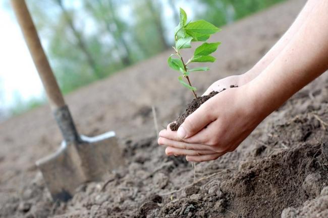 В Министерстве регионального развития готовят запрет высаживать деревья на границе с соседским участком
