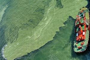 Сточные воды из коллекторов города и жара стали причиной «озеленения» моря в Одессе, - АМПУ