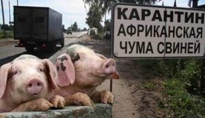 Компания «Агропрайм» получит компенсацию за АЧС