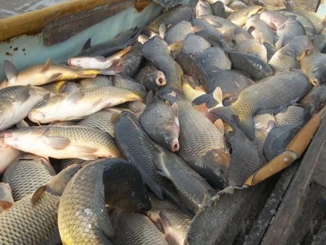 Ренийская полиция открыла 9 уголовных производств по фактам браконьерского рыбного промысла