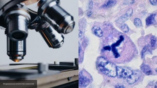 Ученые разработали микророботов для лечения раковых клеток