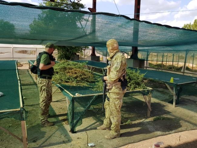 Пограничники и полицейские обнаружили вблизи Измаила одну из крупнейших плантаций конопли
