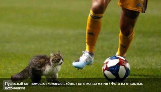 Пушистый кот помешал команде забить гол в конце матча