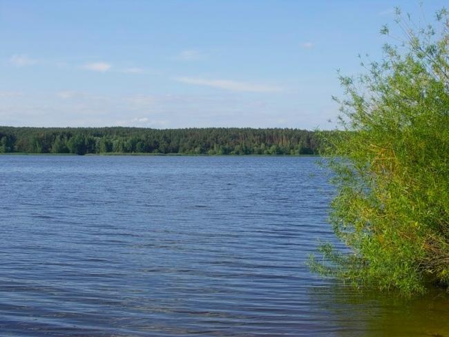 Источник смертельной болезни обнаружили в крупном водохранилище на Харьковщине