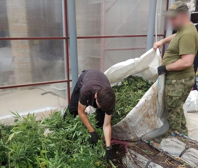 У Болградському районі виявили чергову наркотеплицю з краповим поливом