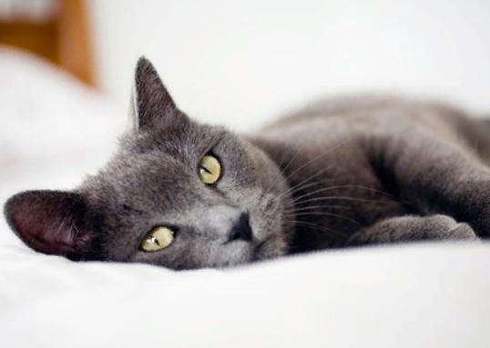 Что, если вашим психологом может быть ... кот?