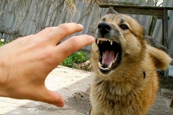 Собаки-маньяки, бойтесь!